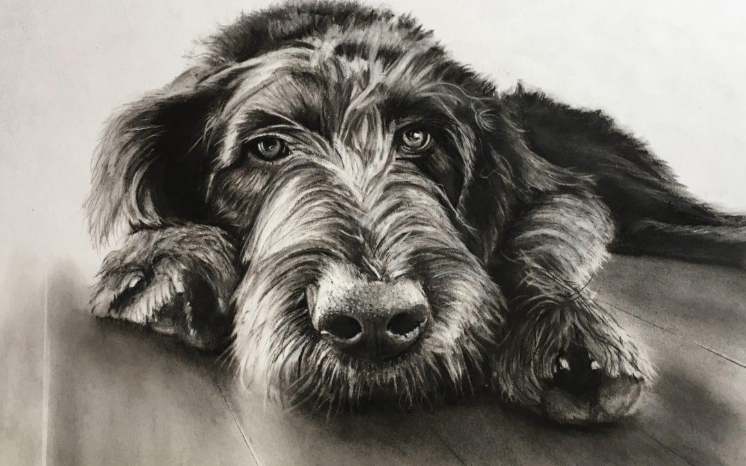 Portraits Hunde