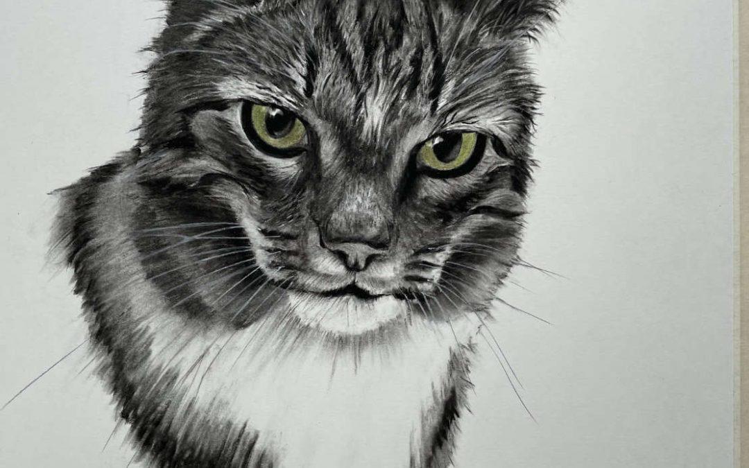 Portraits Katzen