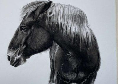 Portraits Pferde